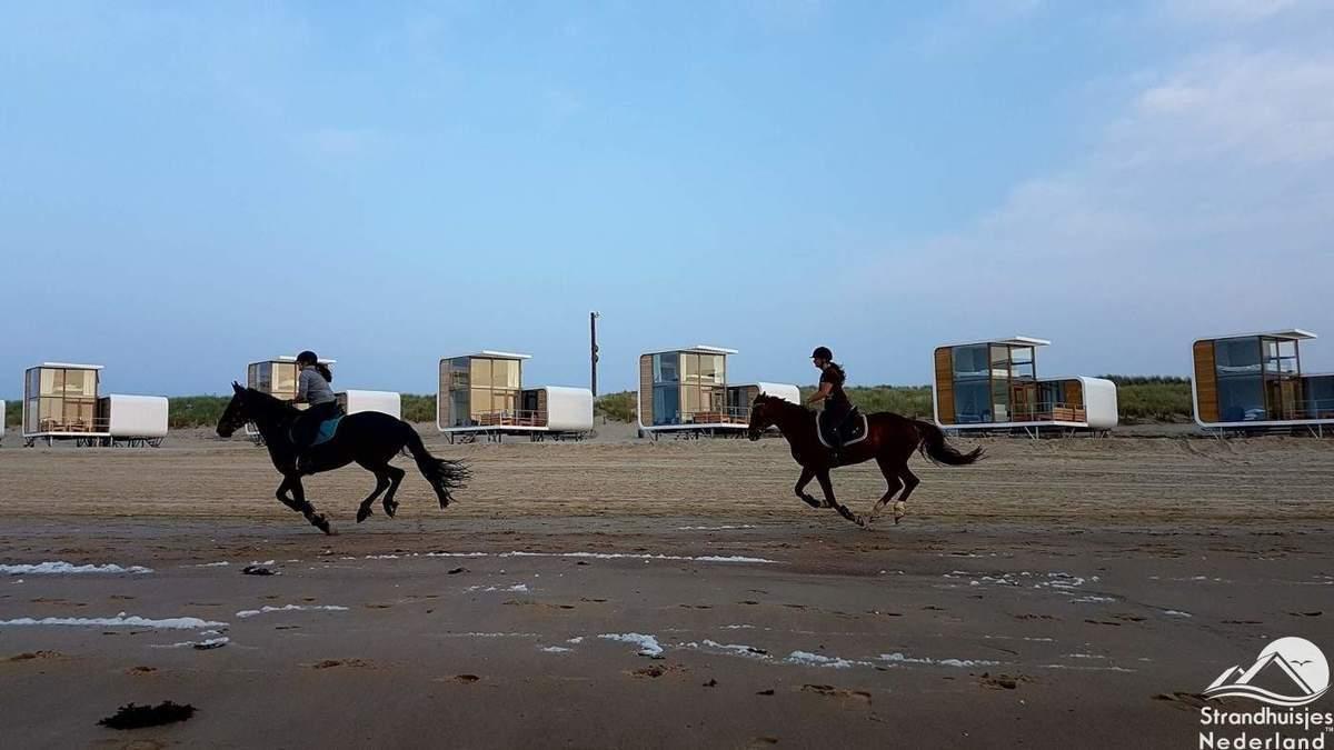 Paarden-op-strand-Nieuwvliet