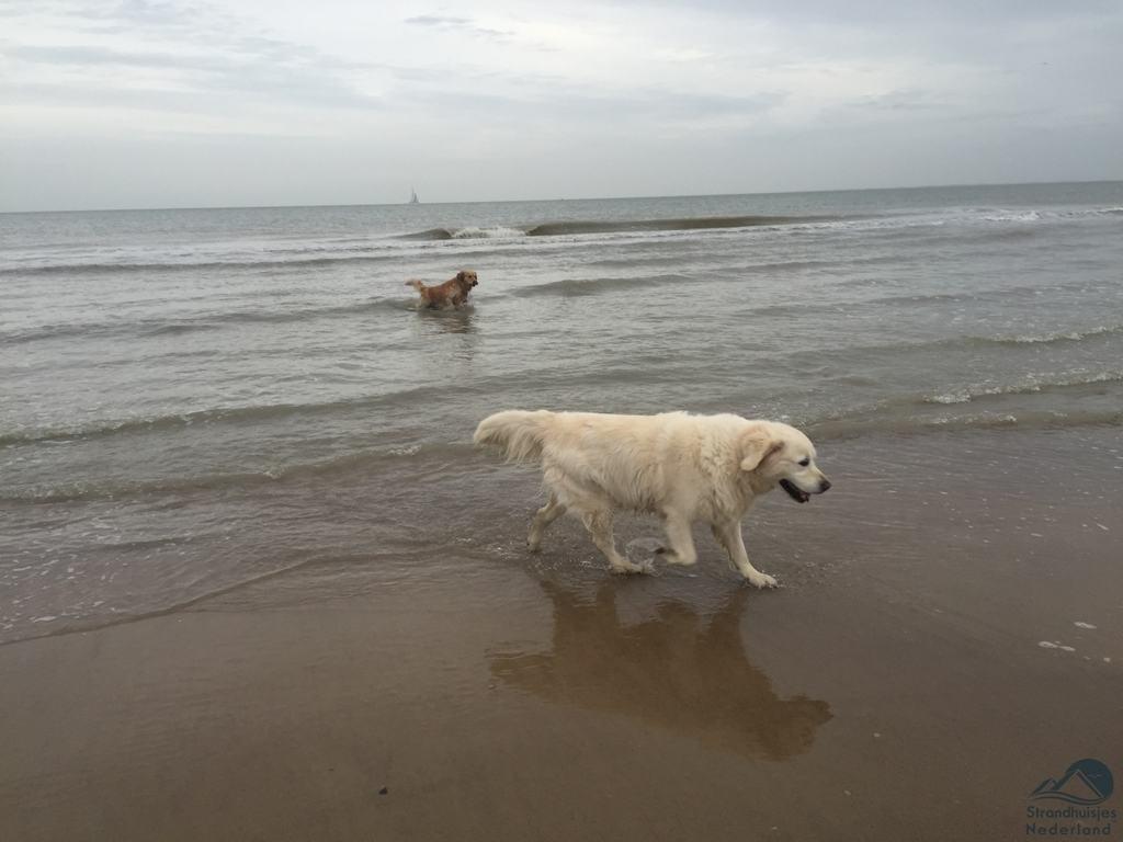 honden strand Cadzand