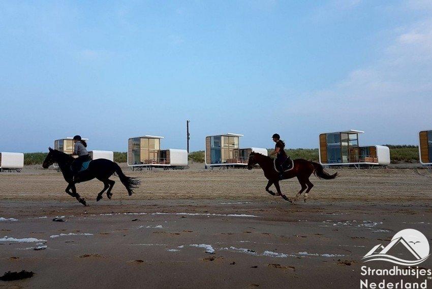Paarden op strand Nieuwvliet