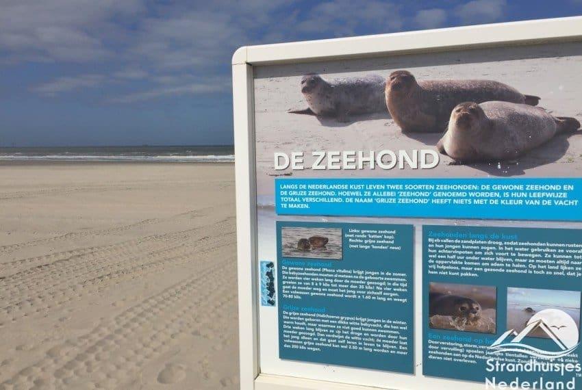 zeehonden strand Hoek van Holland