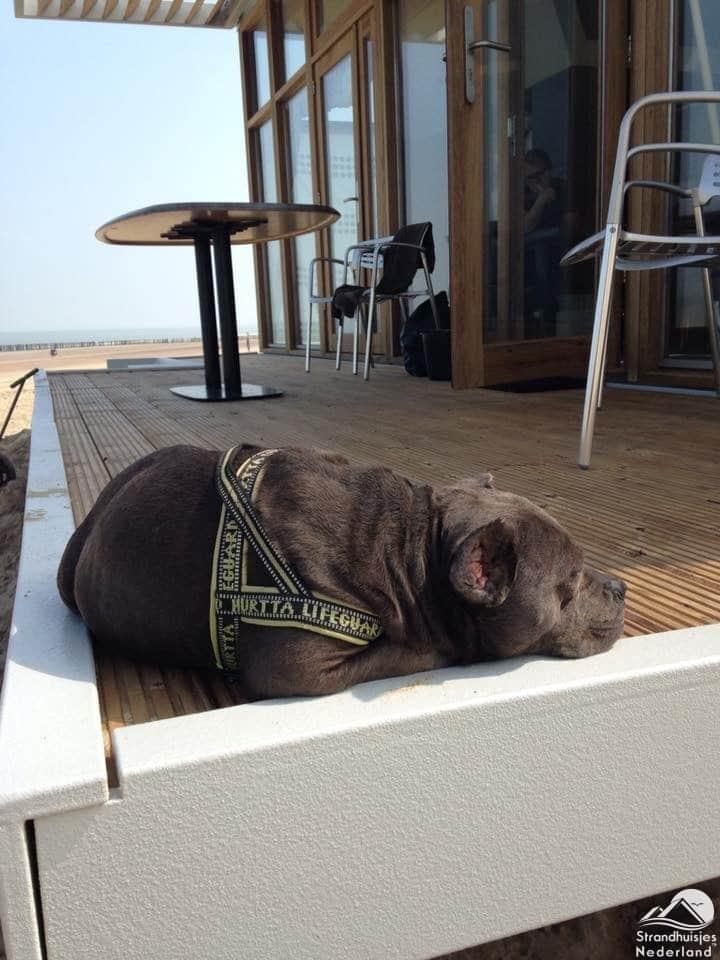 Hond strandhuisje Cadzand
