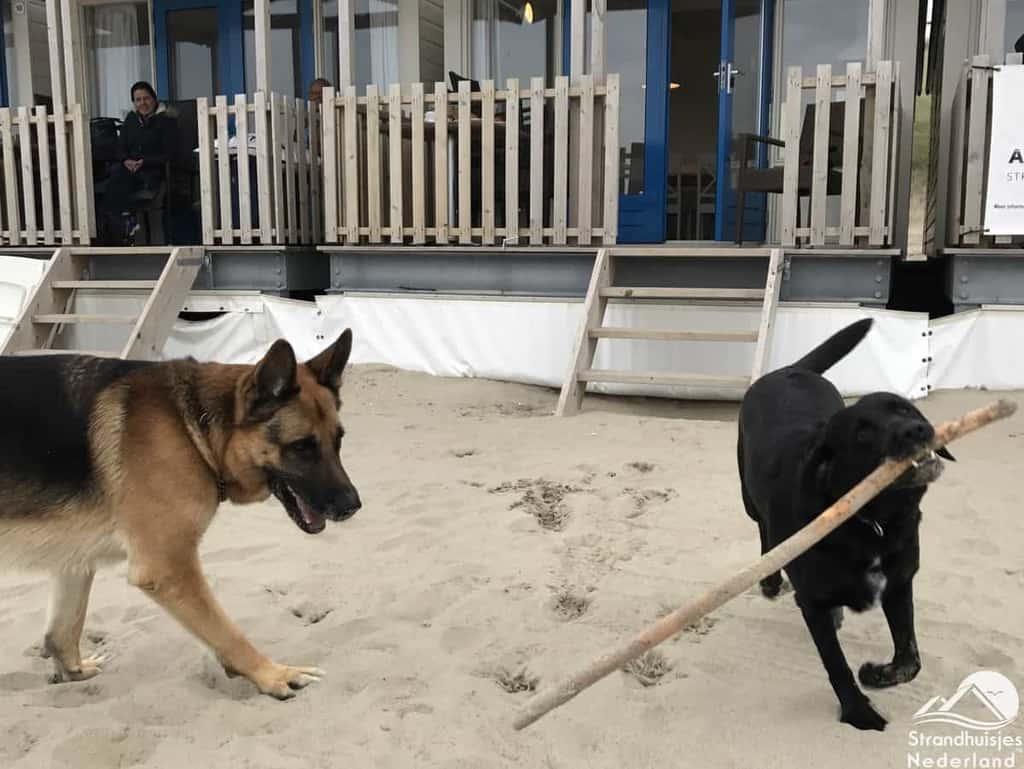 Honden bij strandhuisje Wijk aan Zee
