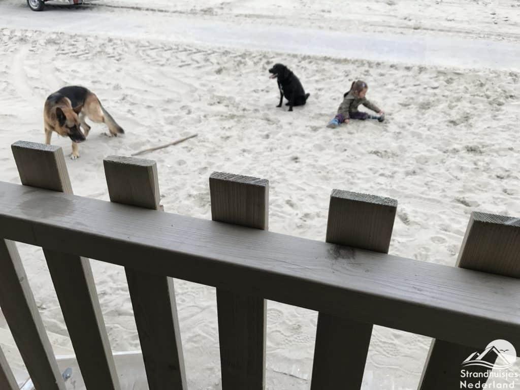 Honden strand Wijk aan Zee