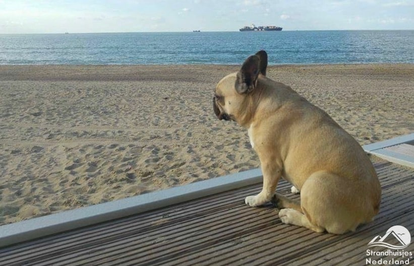 Hond strandterras Cadzand