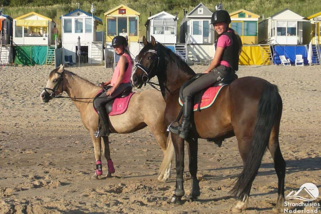 Paarden strand Dishoek