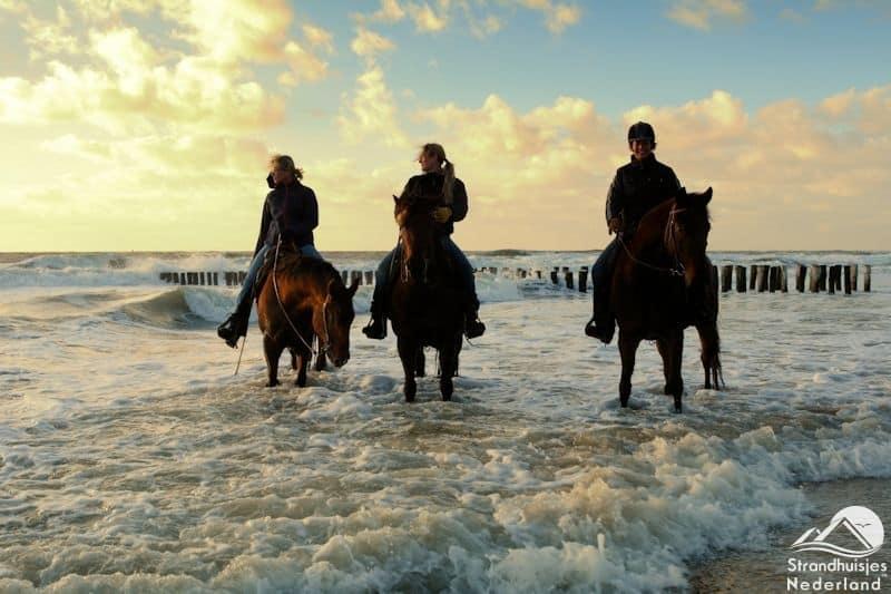 Paarden strand en zee Dishoek