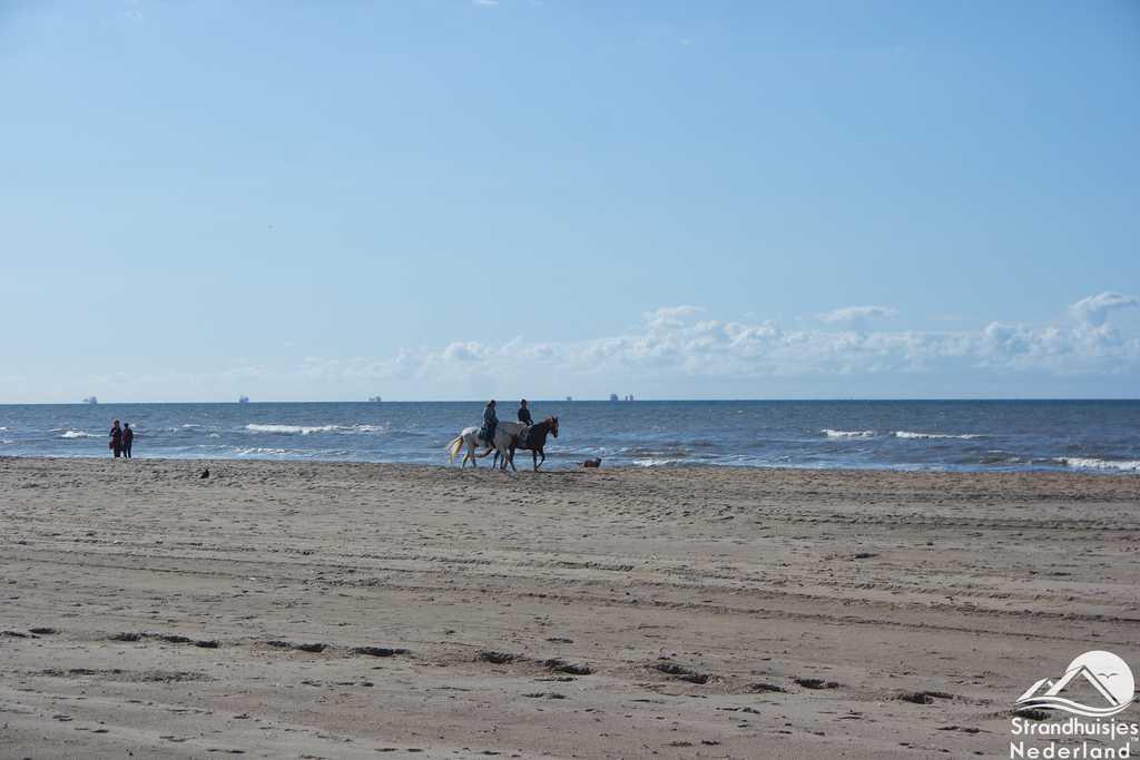 Strand, zee en paarden Katwijk