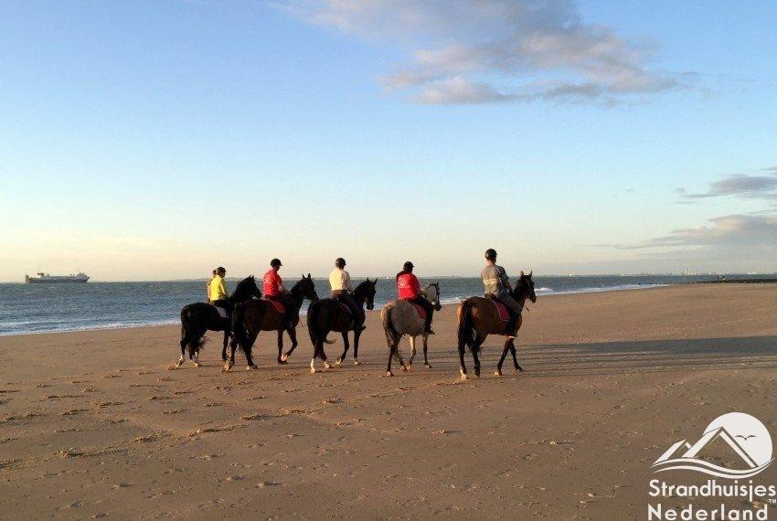 paarden strand Nieuwvliet-Bad