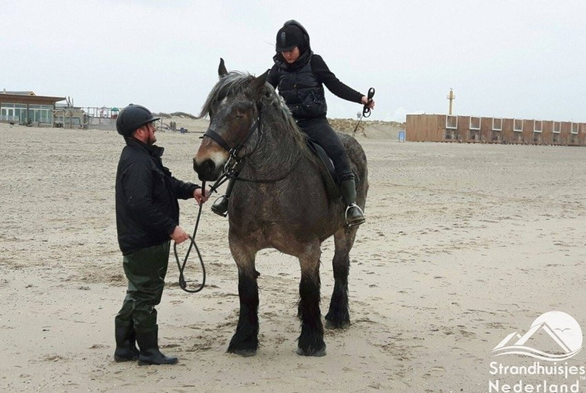 Ook paarden voelen zich thuis op het strand van Hoek van Holland