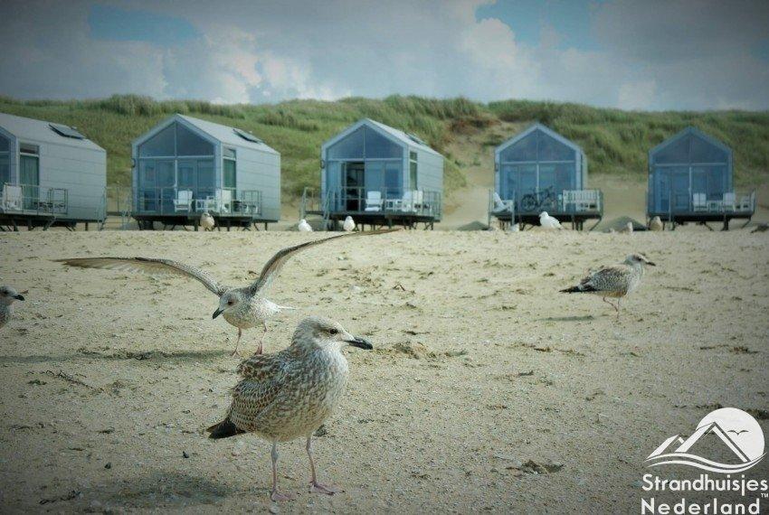 Prachtige vogels bij strand Julianadorp